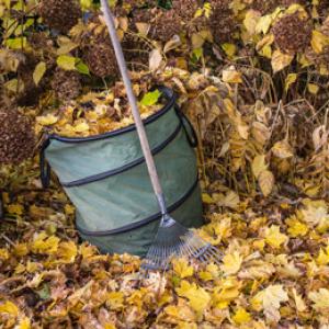 Gartenpflege im Jahresabo